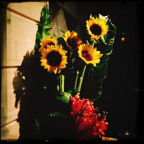 I lob sunflower