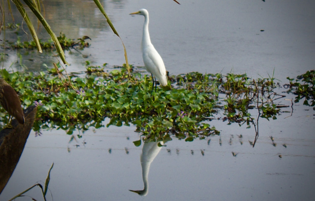 Animal Themes Animals In The Wild Beauty In Nature Beauty In Nature Bird Heron Lake Natural Beauty Nature One Animal Perching Plant Reflection Scenics Tranquil Scene Tranquility Water Water Bird Water Plants Water Reflections Waterfront Wild Wildlife Wildlife & Nature