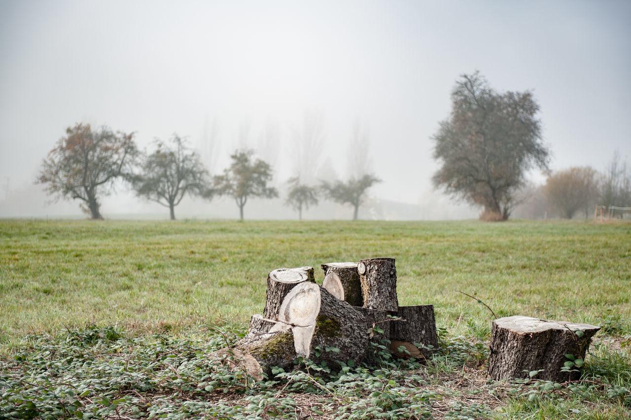 Tree Stumps On Field In Germany