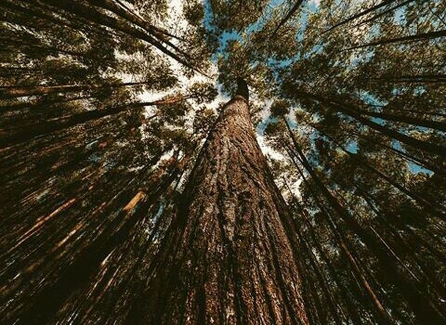 Tree Food Stories Tree Low Angle View Tree Trunk Nature Growth Full Frame Branch Outdoors No People Forest Beauty In Nature Backgrounds Close-up Sky Day