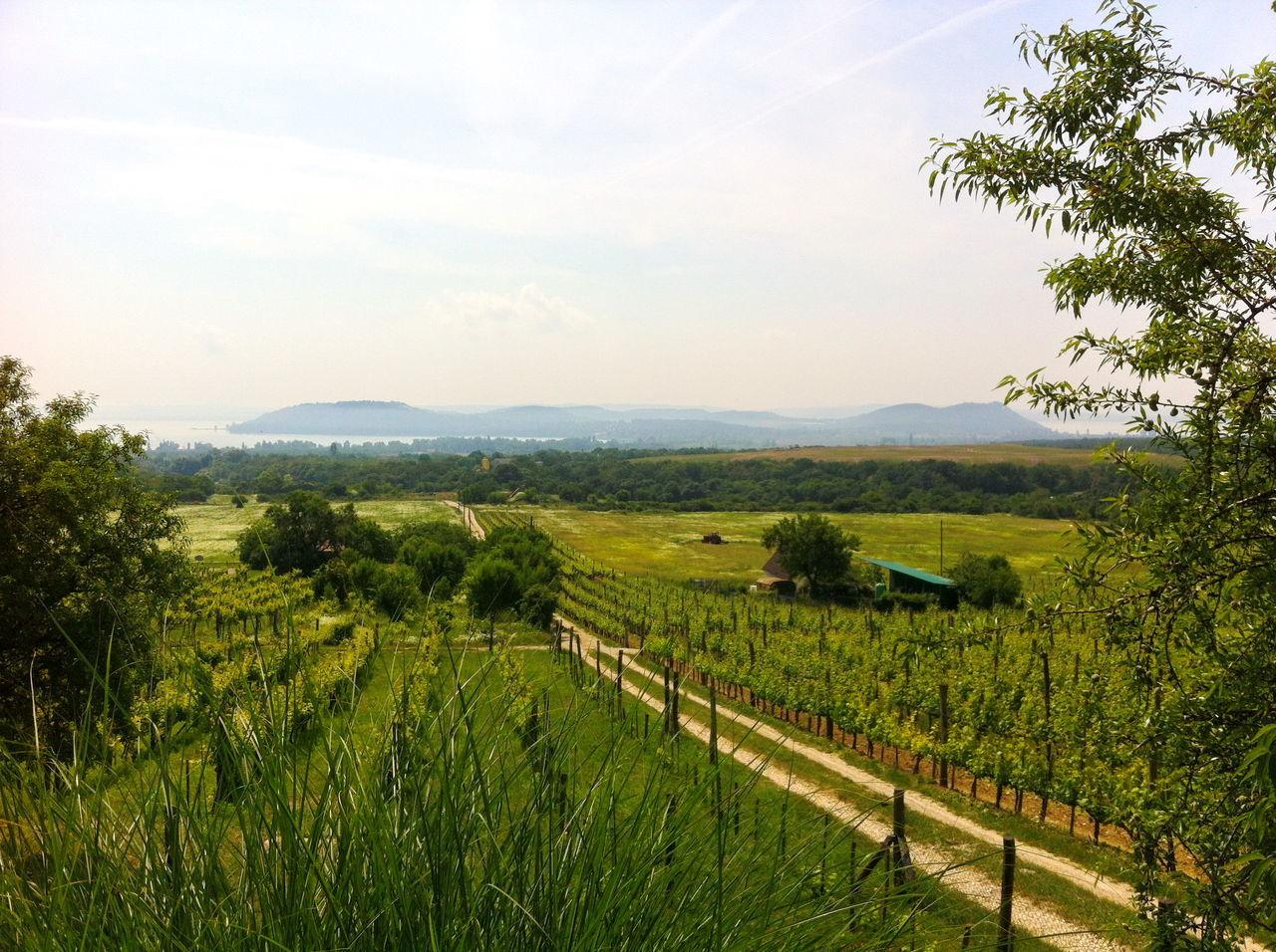 Beautiful stock photos of hungary, Agriculture, Balatonfüred, Blade Of Grass, Cloud - Sky