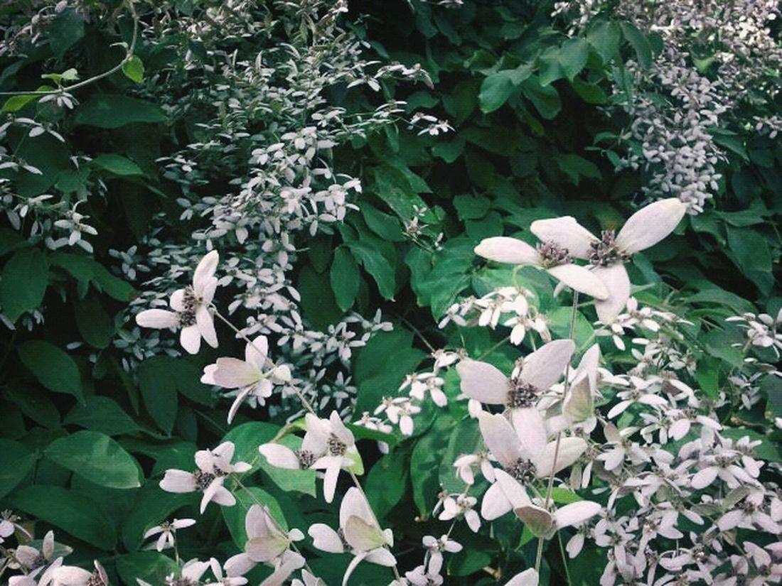 Flower Green Park Random