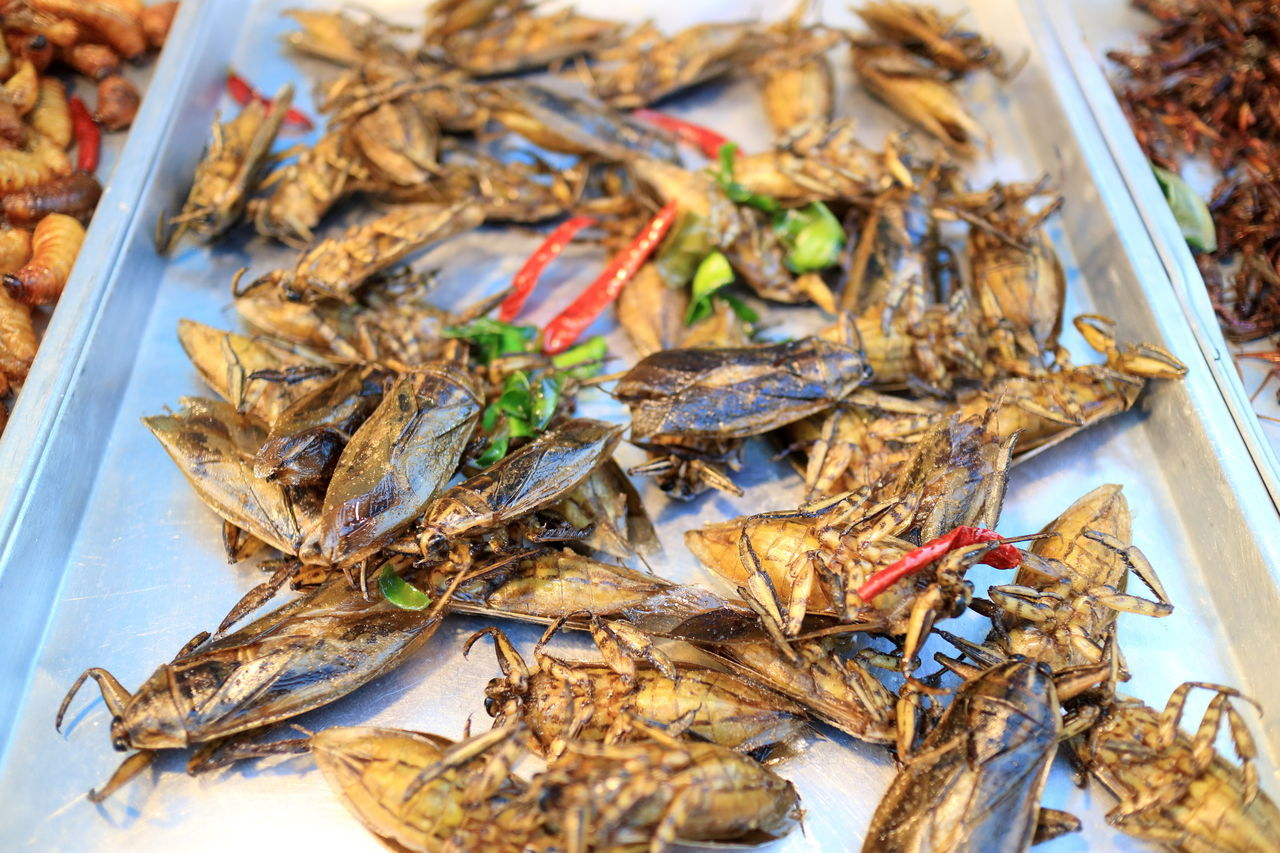 yummy fried cockroaches on Ratchada Train Night Market in Bangkok Thailand Bangkok Focus On Foreground Food Fried Healthy Eating Healthy Food Heap Insects  Large Group Of Objects No People Protein Ratchada Still Life Street Food Street Food Worldwide Street Market Hate Or Love It Despicable Or Mouth Watering Thailand Traditional Food Traditionalfood