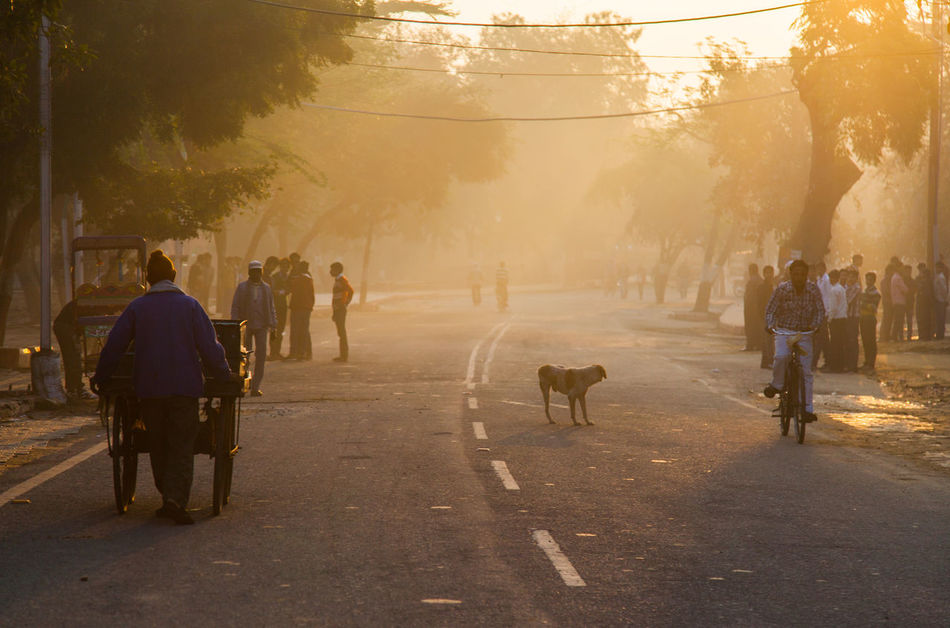 Beauty In Nature Day Early Morning Full Length Haze India Large Group Of People Men Nature One Animal Outdoors People Real People Road Sky Sunset The Way Forward Tree