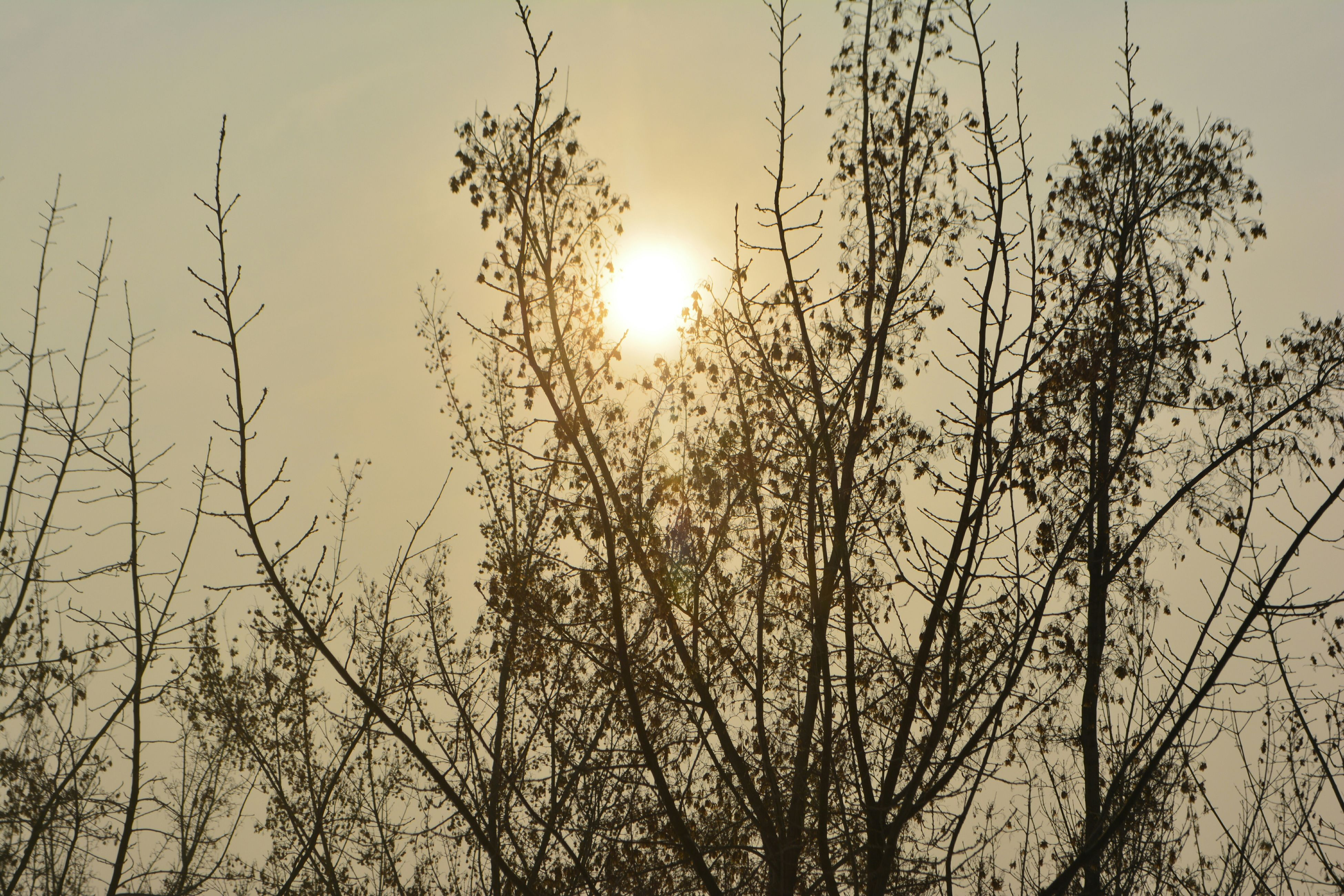 sun, sunset, silhouette, tranquility, tree, beauty in nature, sunlight, branch, tranquil scene, nature, bare tree, sky, scenics, sunbeam, lens flare, growth, low angle view, clear sky, back lit, outdoors