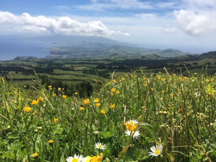 Flowerpower Azores Vulcano Bestholiday Growth Field Nature Flower Beauty In Nature Sky Landscape Day No People Plant Cloud - Sky Outdoors Freshness Tranquility Tranquil Scene Yellow Green Color Rural Scene Scenics Grass