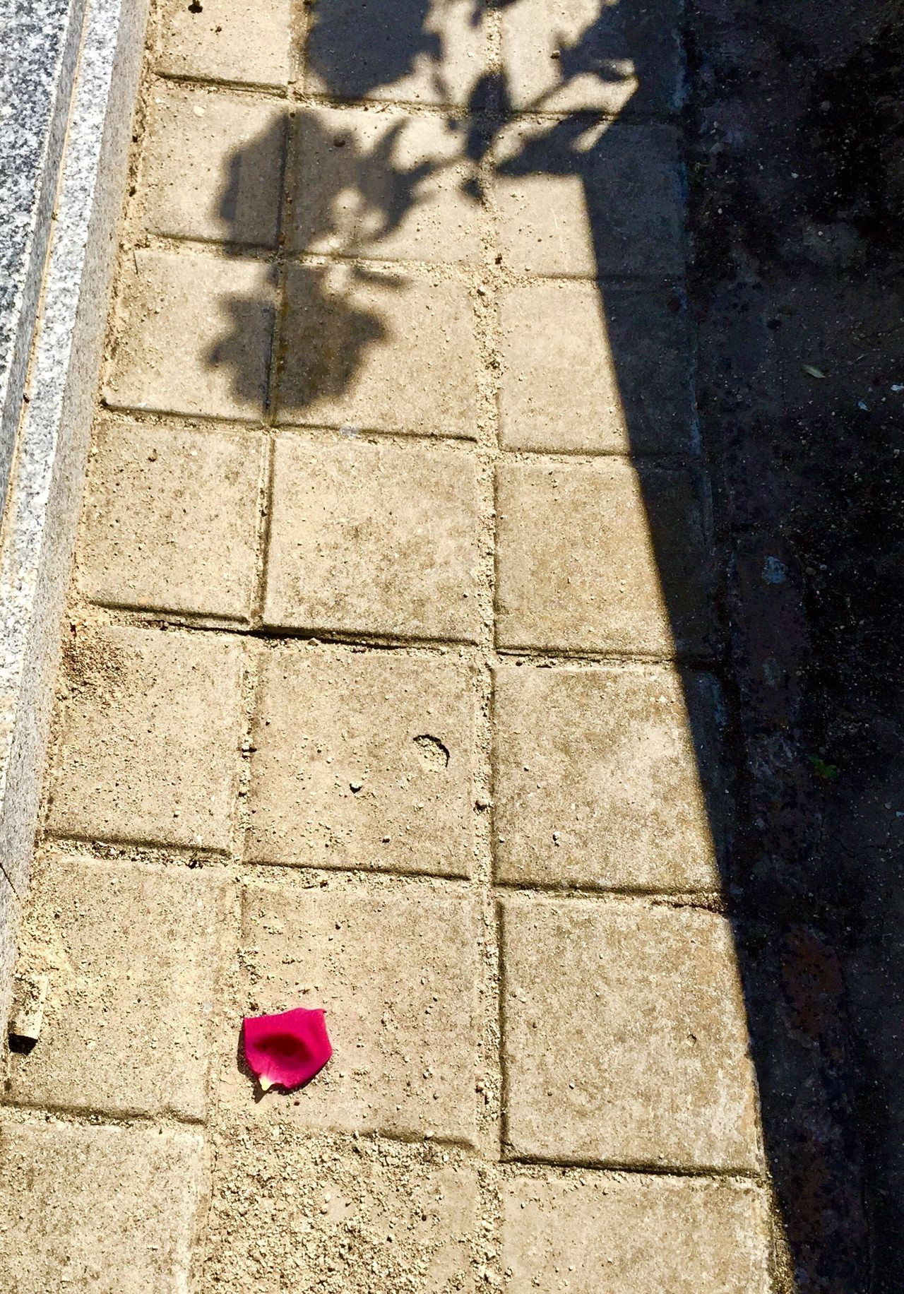 Shadow High Angle View Sunlight Day Outdoors No People Nature Petal Of Rose
