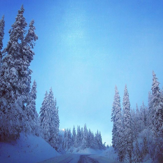 Winterwonderland Strupen Tynset Hedmark Idyll Frostopia Yrbilder InMotion Utno Ulvangkonkurranse Magisk Dnt Norgeibilder Ilovenorway Winter Vinter 24svipptursekker