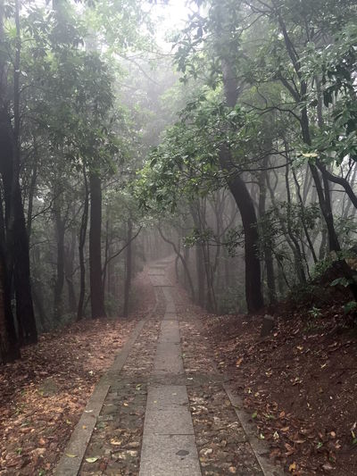 Path through the tea plantation near Hangzhou | 2016 Beauty In Nature Day Detox Fog Forest Growth Hangzhou Idyllic Landscape Nature No People Outdoors Scenics Tea Tea Village The Way Forward Tranquil Scene Tranquility Tree
