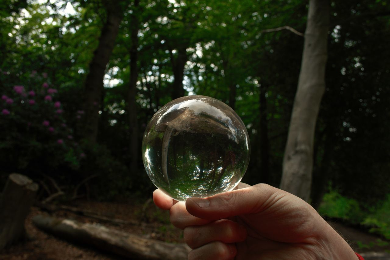 human hand, crystal ball, holding, tree, human body part, reflection, outdoors, focus on foreground, day, nature, one person, real people, fragility, close-up, bubble wand, people