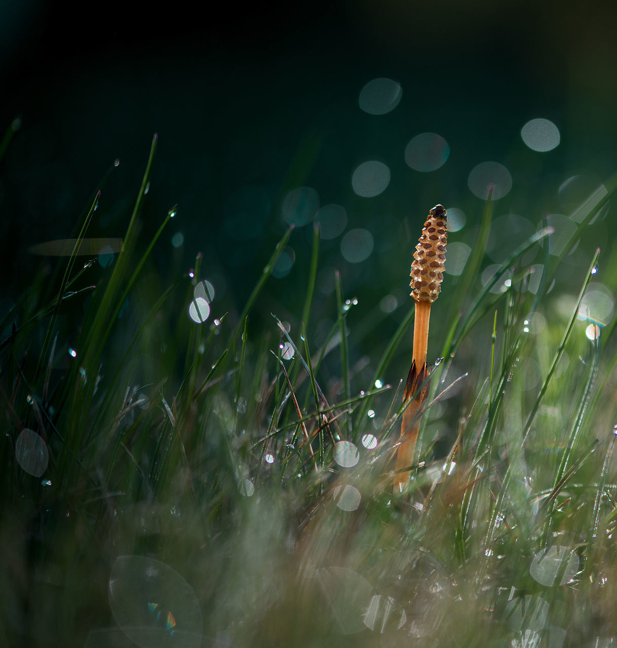 grass, nature, selective focus, close-up, no people, growth, beauty in nature, outdoors, plant, mushroom, fragility, day, freshness, toadstool