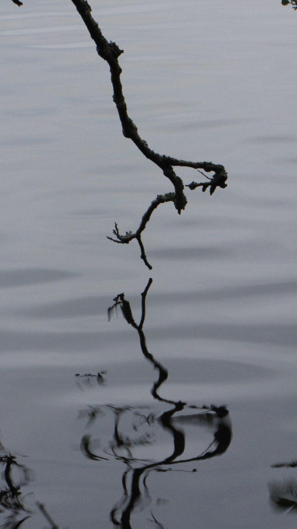 отражение коряга Snag бонсай Bonsai Branches ветки Ripples рябь Reflection