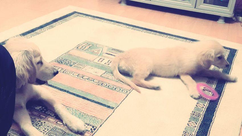 New Babyİra ♡ Tonny Love Pets