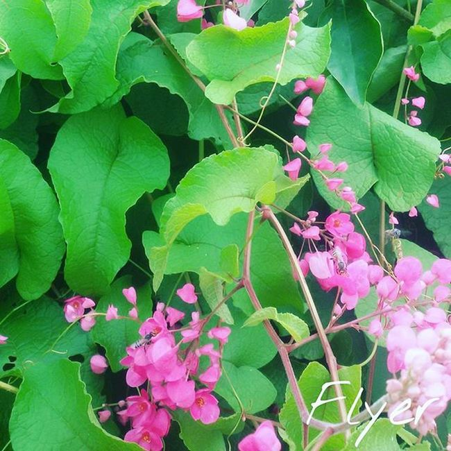 Close Up Plants Cares Mumbaimerijaan Maharashtra Dil Kadak
