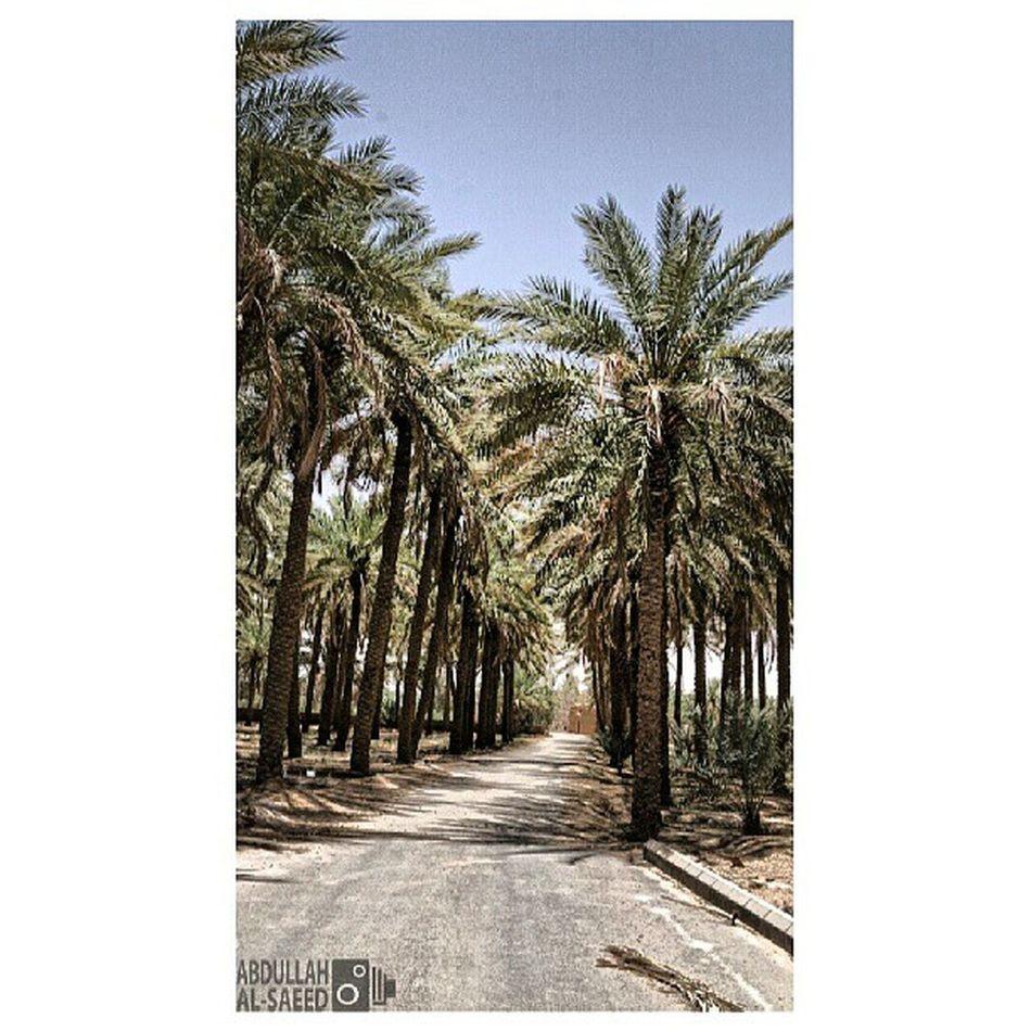 مزرعة الربيعية القصيم السعودية  ksa Saudi nature beautiful landscapes photography photo photos TagsForLikes picture photography سوني sony sonya57 green tree trees