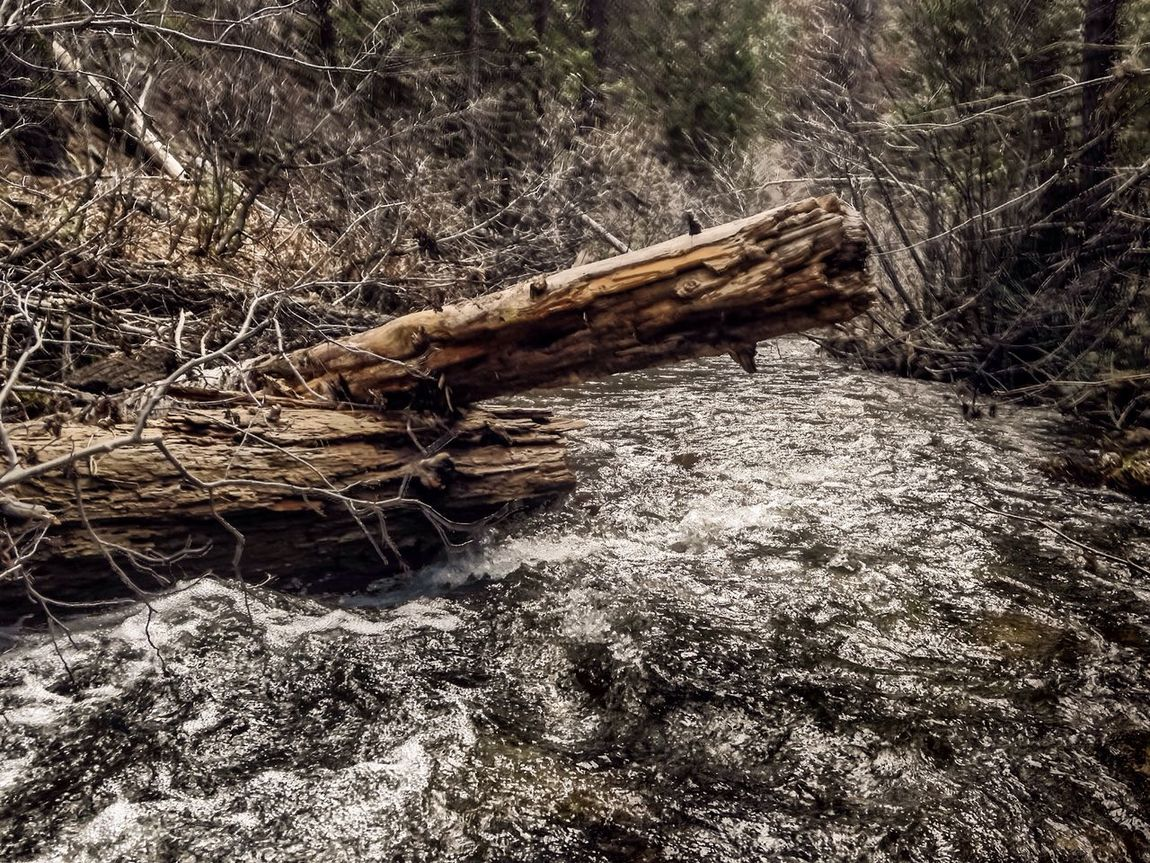 River Rapids Stanisluas National Forest Forest Pinetrees Mountains Jenness Park Logs Rocks Water IPhone Iphone 5 IPhoneography Mobilephotography Lightroom Mobile