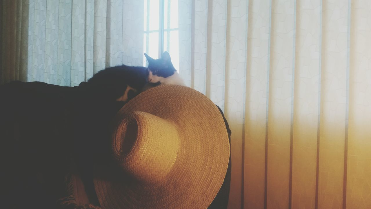 Window Indoors  Curtain Sunlight One Animal Cat Hat Big Hat