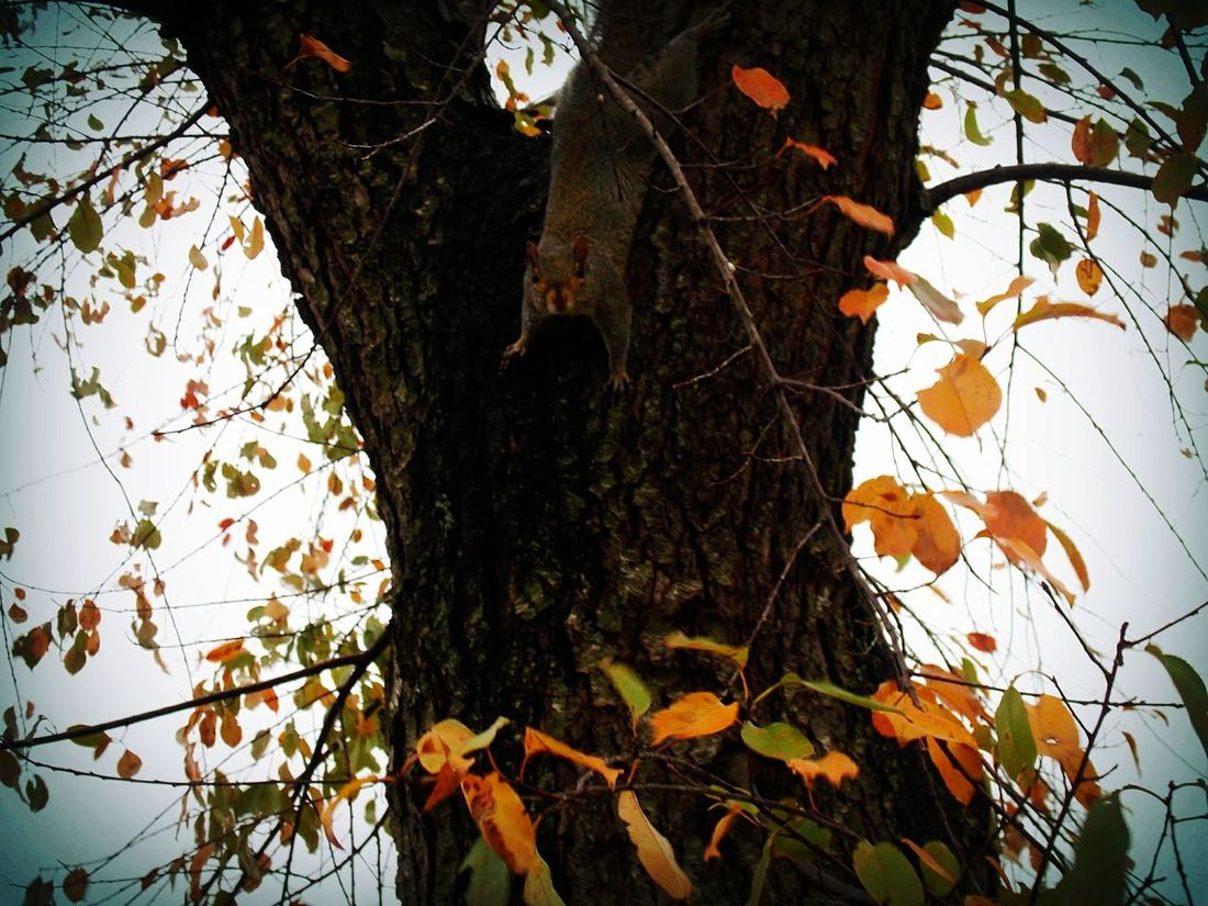 Showcase: November Squirrel Photo Nature_collection From My Point Of View Naturephotography Countryside Hello World Looking For Peanuts