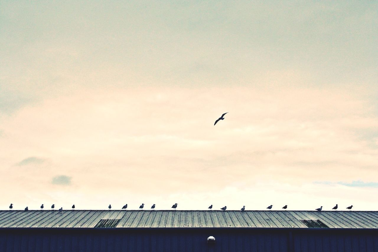Birds perched on rooftop against the sky