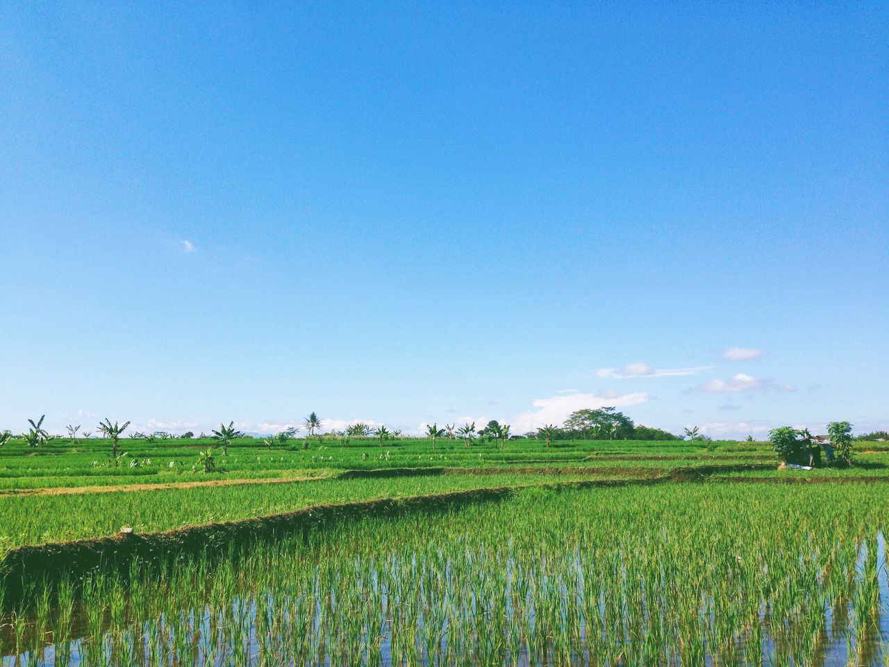 Beautiful stock photos of indonesia,  Agriculture,  Beauty In Nature,  Blue,  Clear Sky