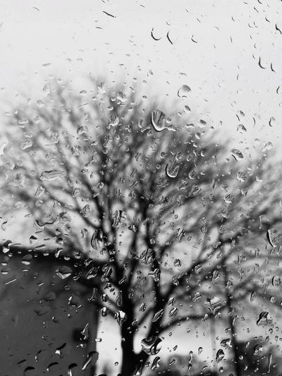 Another Rainy Day Just Another Rainy Day Geting Inspired Thanks For Following Me! Taking Photos Hey World Good Morning Showcase: December Rain Raindrops Rainy Days Raining Nature From My Point Of View EyeEm Nature Lover Trees Blackandwhite Black And White Black & White Blackandwhite Photography Quick Shot My Point Of View