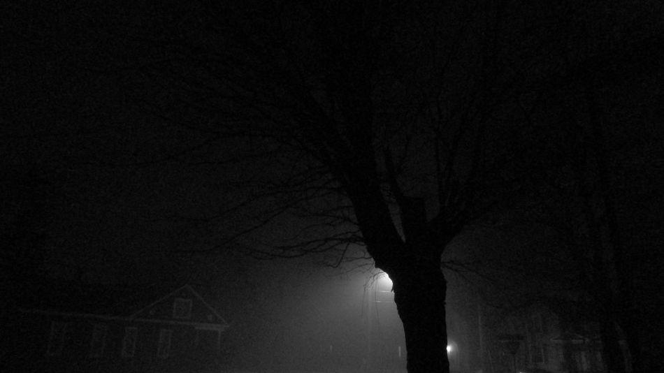 Last Night Foggy Creepy Cool Eerie Beautiful So Quiet Bare Tree My Street Photography Cadillac Sky Pure Michigan
