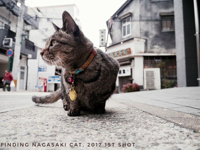 Nagasaki Today Today's 1st Shot Animal Themes On The Street Street Cat Low Position / Panasonic Lumix GX1 LUMIX G VARIO 14-45/F3.5-5.6 28mm Selective Focus Focus On Foreground No Finder 13:46 ( Japan standard time ) de Good afternoon Walking Around The City  Nagasaki-shi