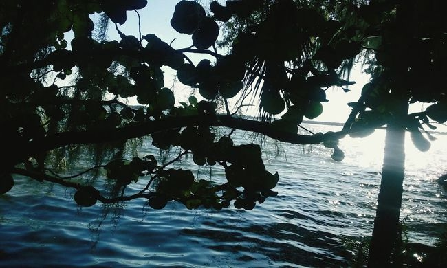 Nature's bridge over water. Trees Branches Sky Water Nature Serenity