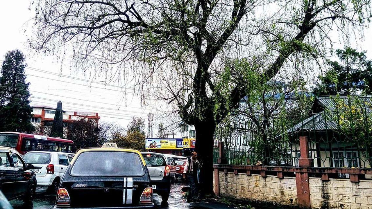 Tree Transportation Outdoors