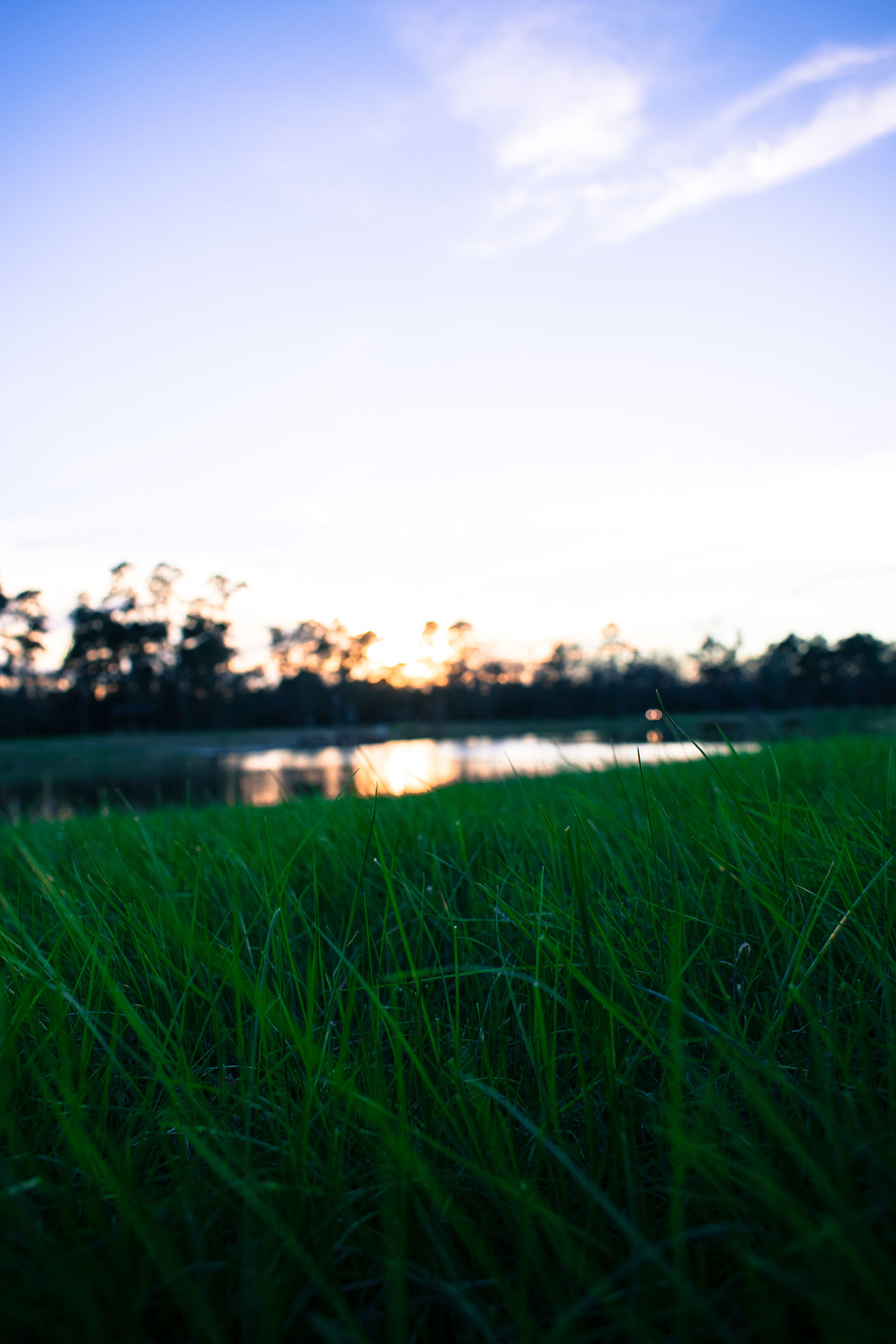 Agriculture Beauty In Nature Cereal Plant Day Field Grass Green - Golf Course Green Color Growth Landscape Nature No People Outdoors Plant Rural Scene Scenics Sky Sunset Tranquil Scene Tree