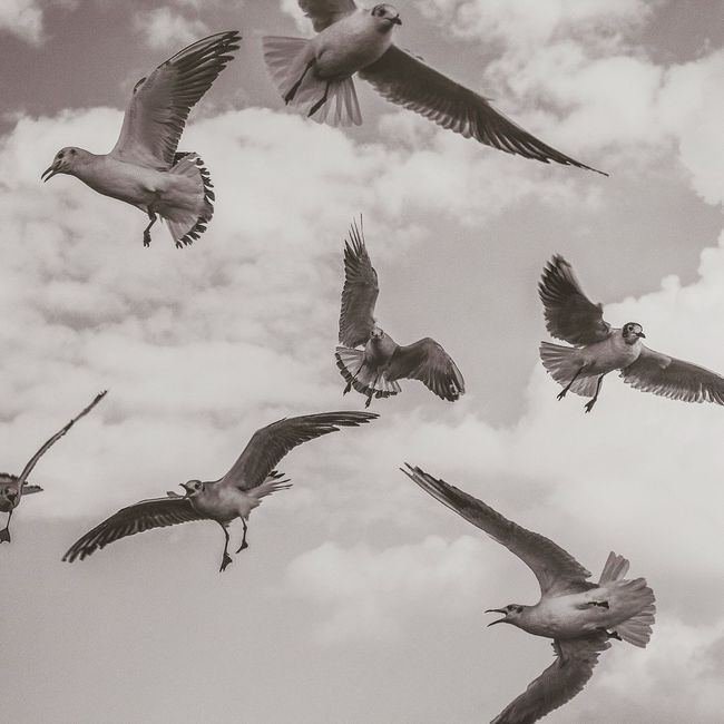 Bisgen Seagulls Blackandwhite Black & White EyeEm Masterclass EyeEm Best Shots Enjoying Life Eye4photography  Bw_collection Sky