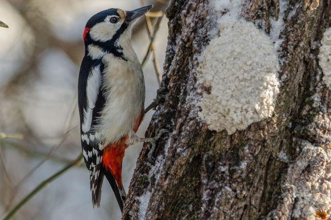 Animals Bird Budapest Halmi Erd Hungary No People Wintertime Zoology