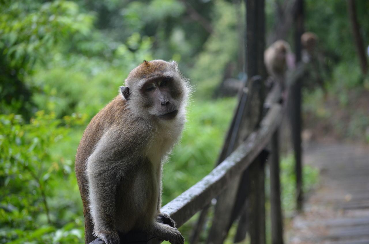 Beautiful stock photos of monkey, Animal Themes, Animal Wildlife, Animals In The Wild, Day