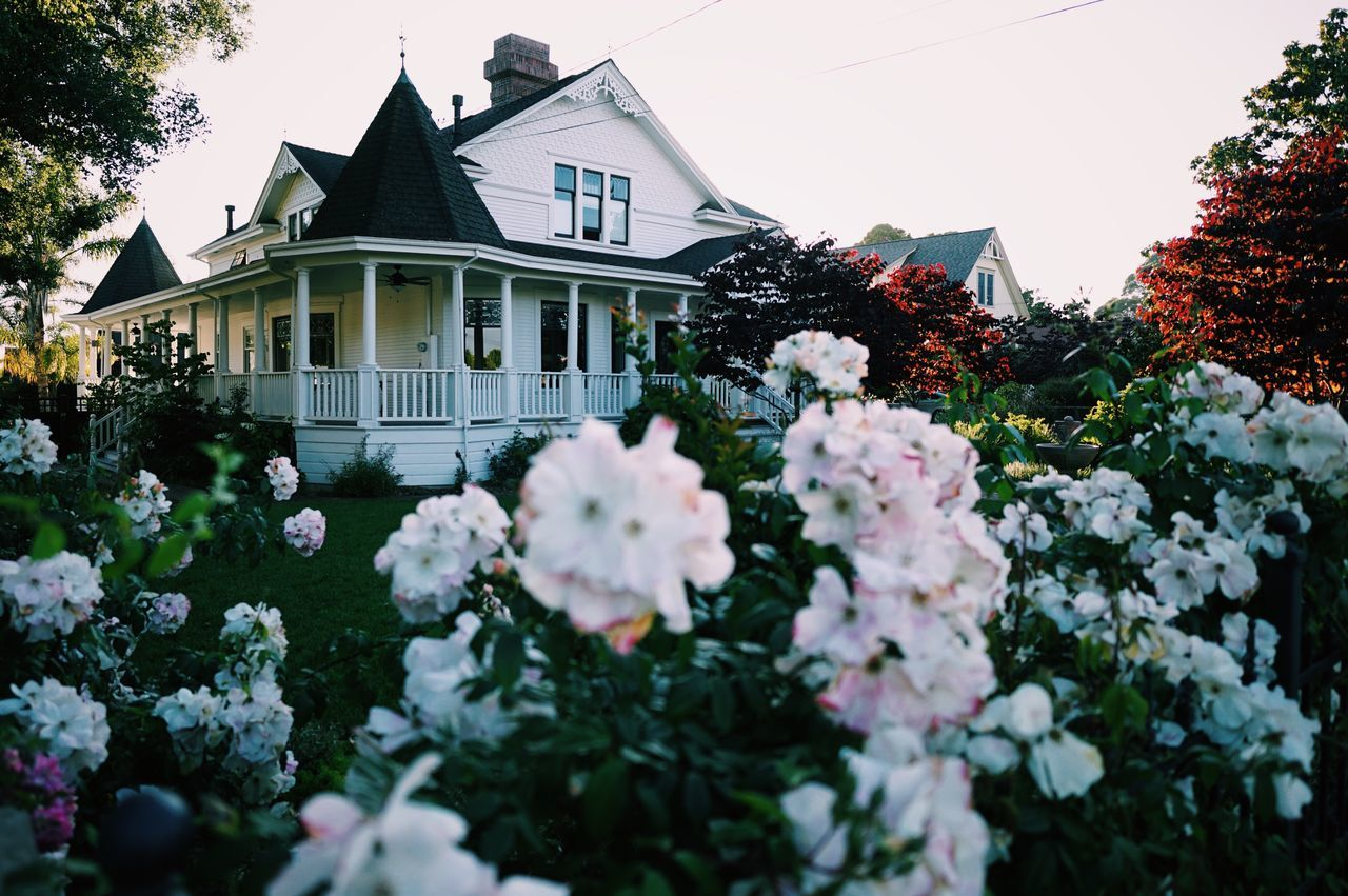 Santa Cruz, CA // Flower Building Exterior House Built Structure Architecture Growth Plant Front Or Back Yard Residential Building Outdoors No People Day Nature Flowerbed Flower Head Tree Sky Freshness