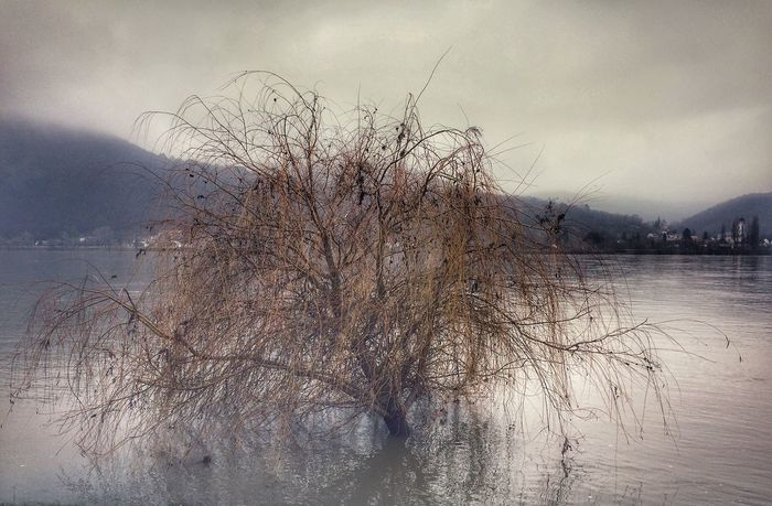 Drowning Foggy Day Deep Water River Bare Tree Water Nature Winter Tranquility Beauty In Nature Sky Tree Mountain Cold Temperature