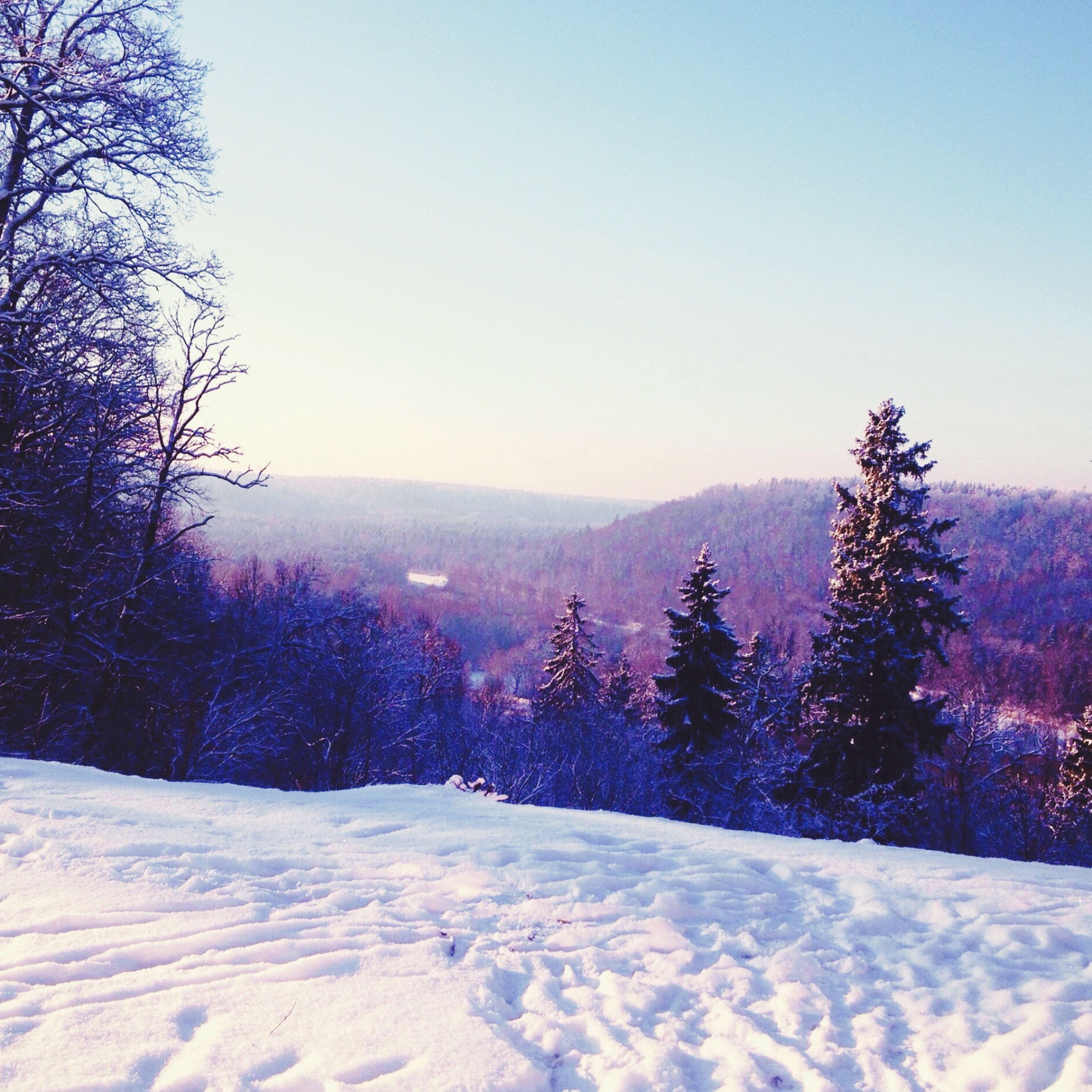 snow, winter, cold temperature, season, tree, clear sky, tranquil scene, weather, tranquility, landscape, scenics, beauty in nature, covering, nature, copy space, mountain, non-urban scene, field, frozen, bare tree