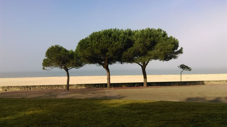 Tree Nature No People Outdoors Day Sky Beauty In Nature Sea Beach