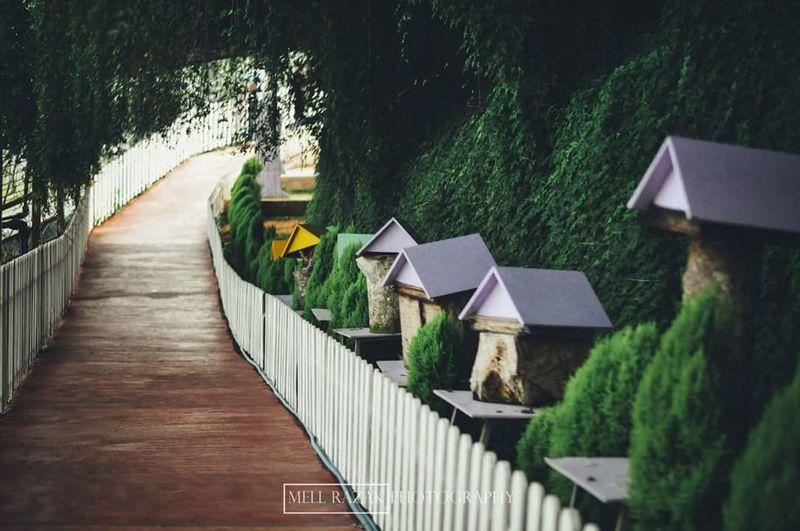 VSCO Vscomalaysia Vscocam Vscoperak Vscopahang Home Cameron Highlands Cameronhighlands Adapted To The City The City Light