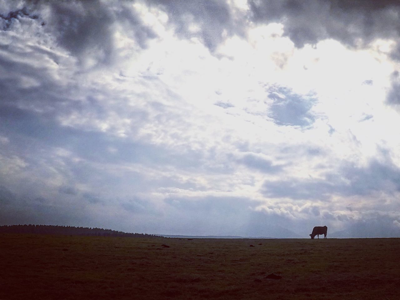 Pasture Cow Nature Sky Beauty In Nature Cloud Contrast Shillouette Nature_collection Aso Japan Beautiful EyeEm Roadtrip Outdoors EyeEm Nature Lover