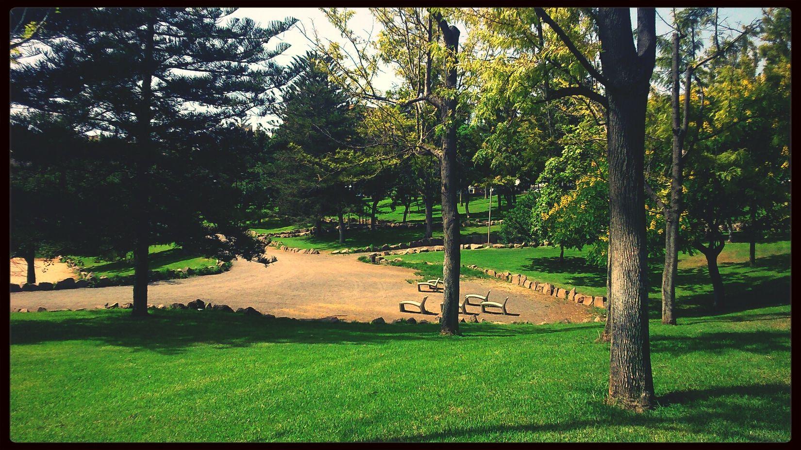En el parque. Park Photooftheday Nature_collection Streamzoofamily