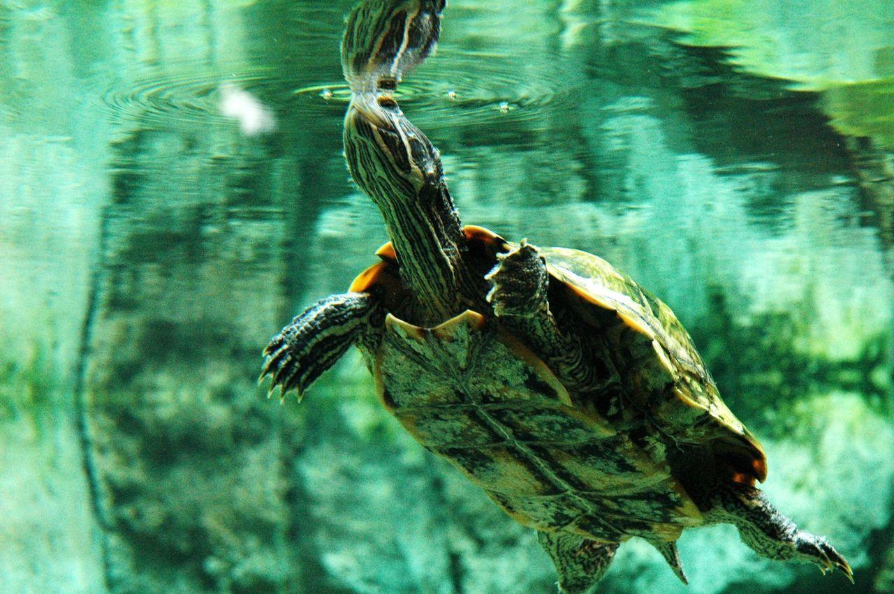 Underwater Photography The Adventure Handbook Capturing Freedom