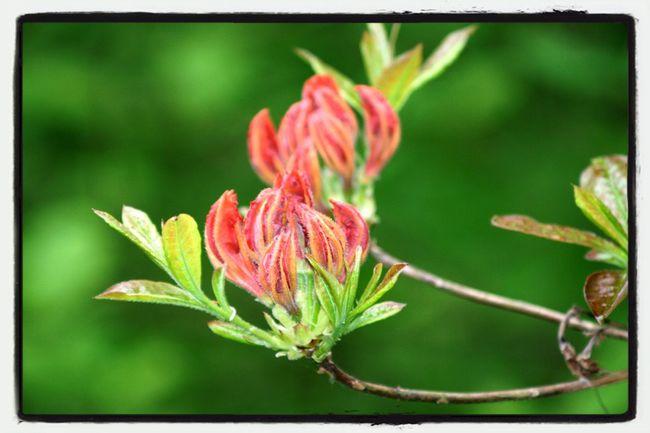 Nature Flowers