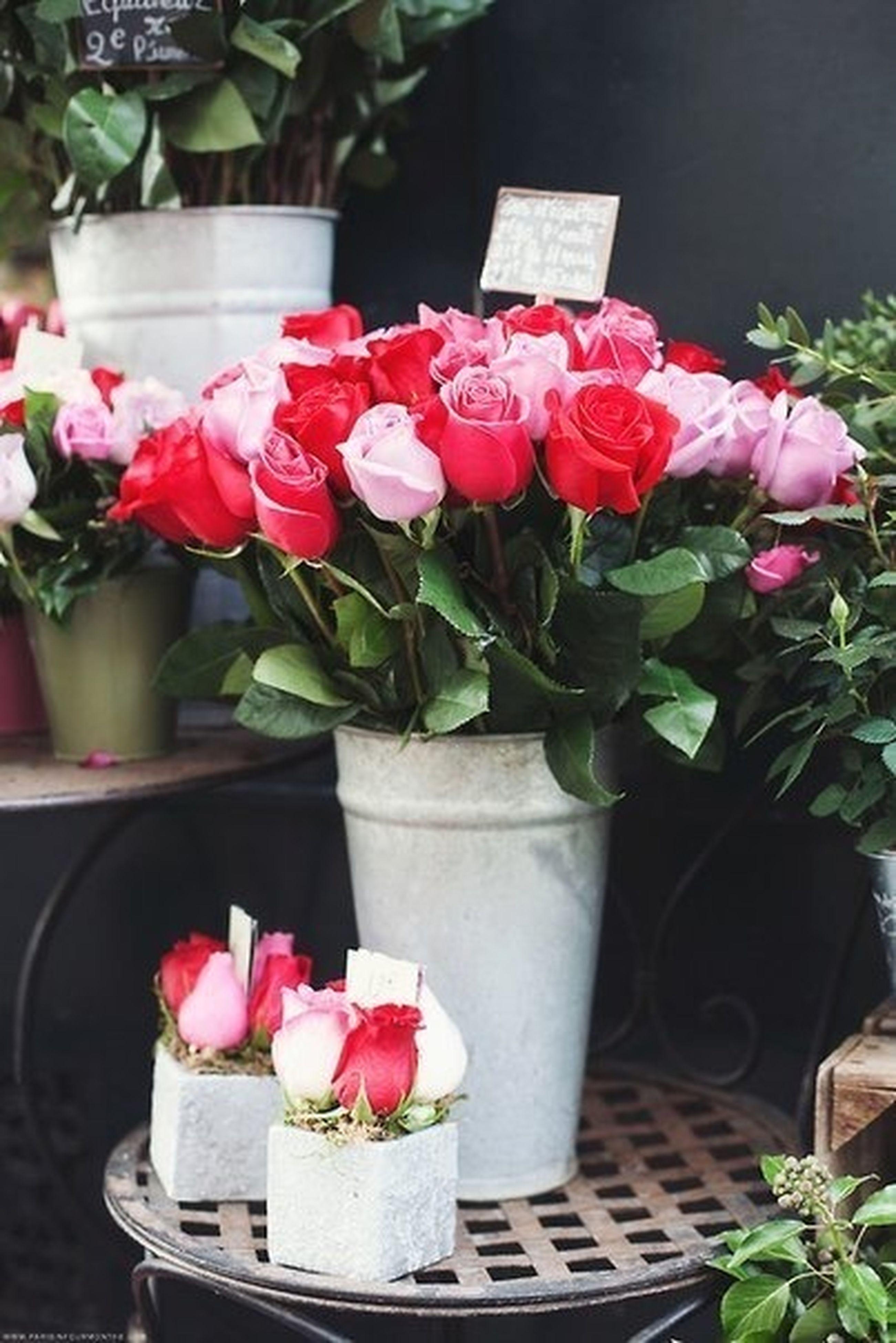 flower, freshness, potted plant, fragility, vase, plant, pink color, flower pot, growth, petal, indoors, table, rose - flower, beauty in nature, flower head, nature, close-up, leaf, bouquet, flower arrangement