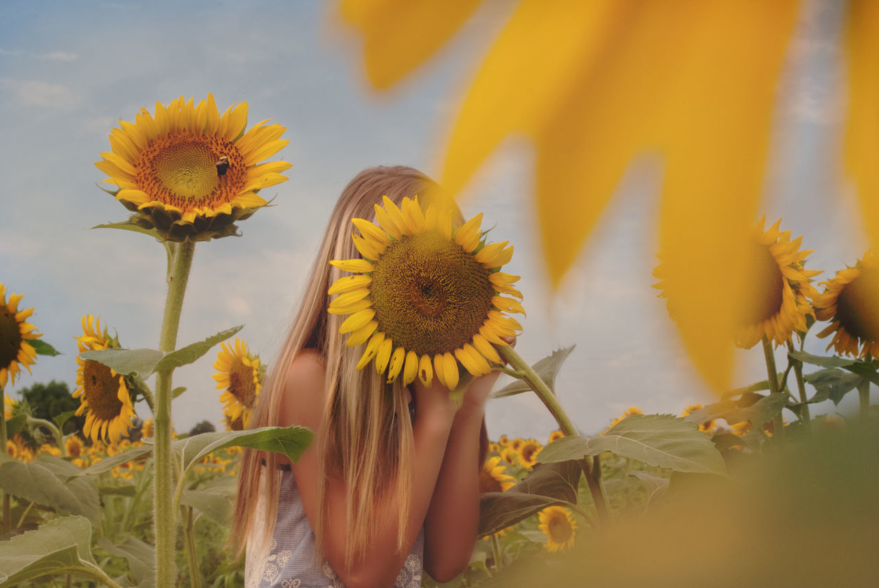 Beautiful stock photos of sunflower,  Beauty In Nature,  Blond Hair,  Botany,  Casual Clothing