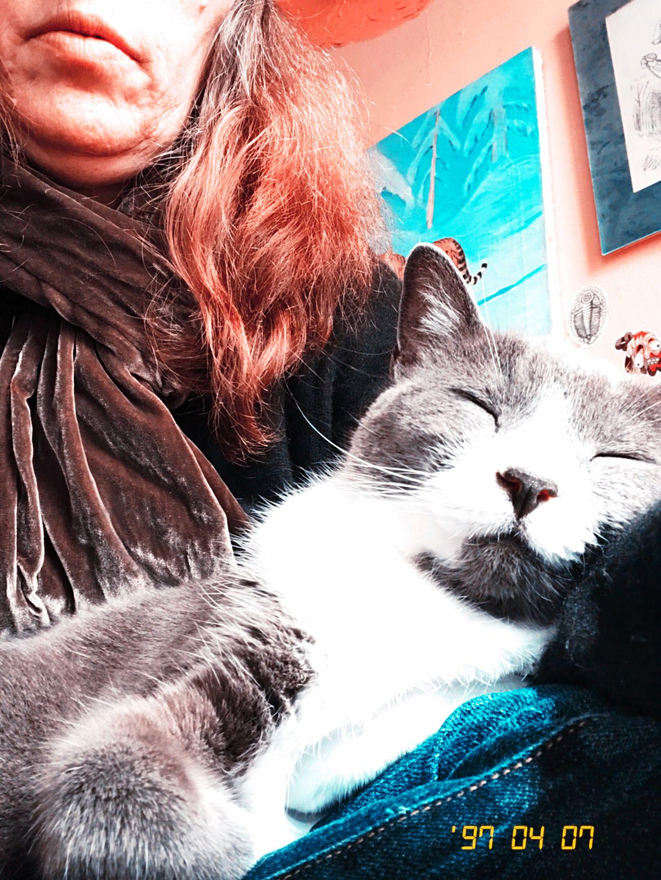 Domestic Cat Pets Cat Colorshift Kissimmee Hipstamatic Koduckgirl Me