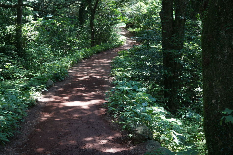 Beauty In Nature EyeEm Nature Lovers Forest Path Summer Views Fresh And Clean Beautiful Nature Relaxing Walking In The Forest