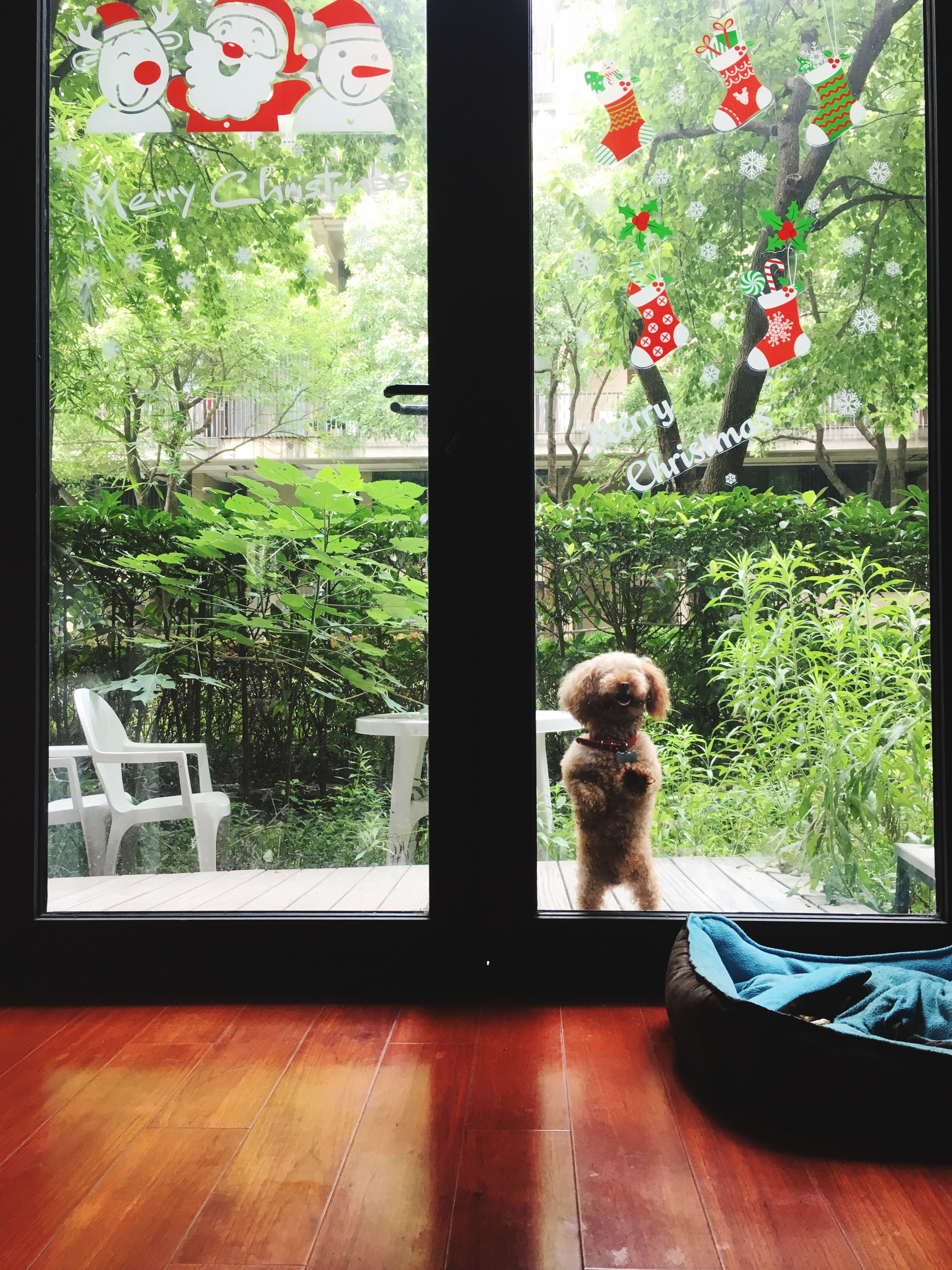 pets, dog, window, domestic animals, animal themes, indoors, one animal, mammal, day, no people, home interior, tree, growth, nature
