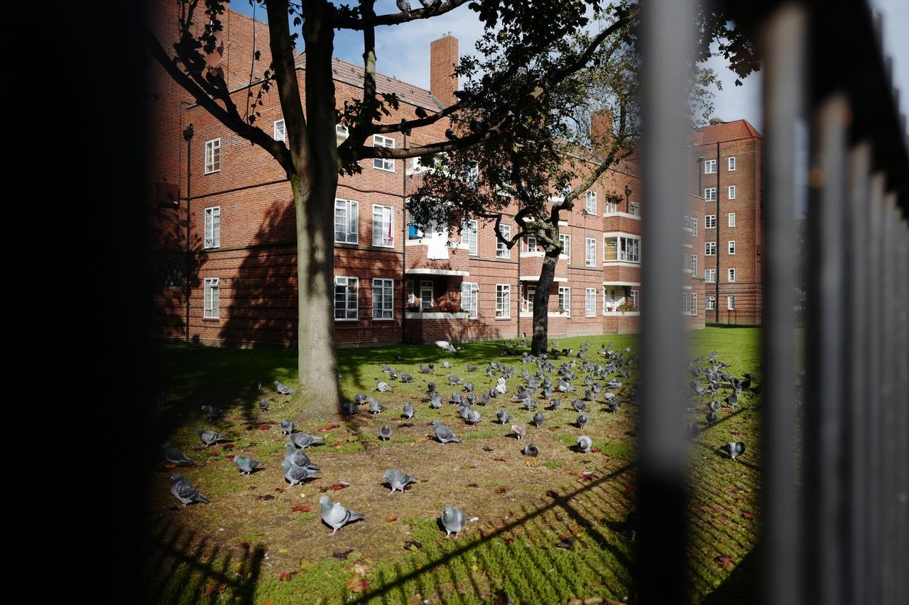 London pigeon lifestyle, October 2016 Building Exterior Architecture London Lifestyle London Pigeons Pigeonslife Leicaq