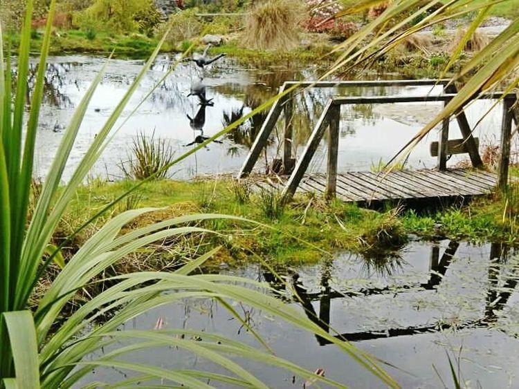 2010, Port Appin Reflection Plant Tranquil Scene Reflection Botanic Garden Scotland Pond Relaxing Scottish Scenery Brıdge Scottish Highlands Port Appin
