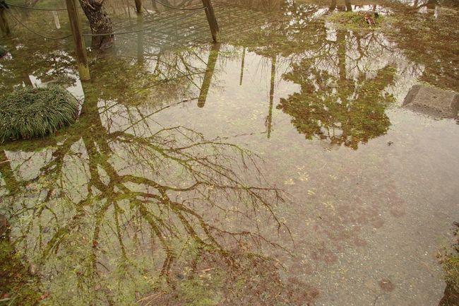 Water Tree Mirror Puddle Another World Beautiful Public Garden Park Green Photography EyeEm Best Shots Japan Odawara